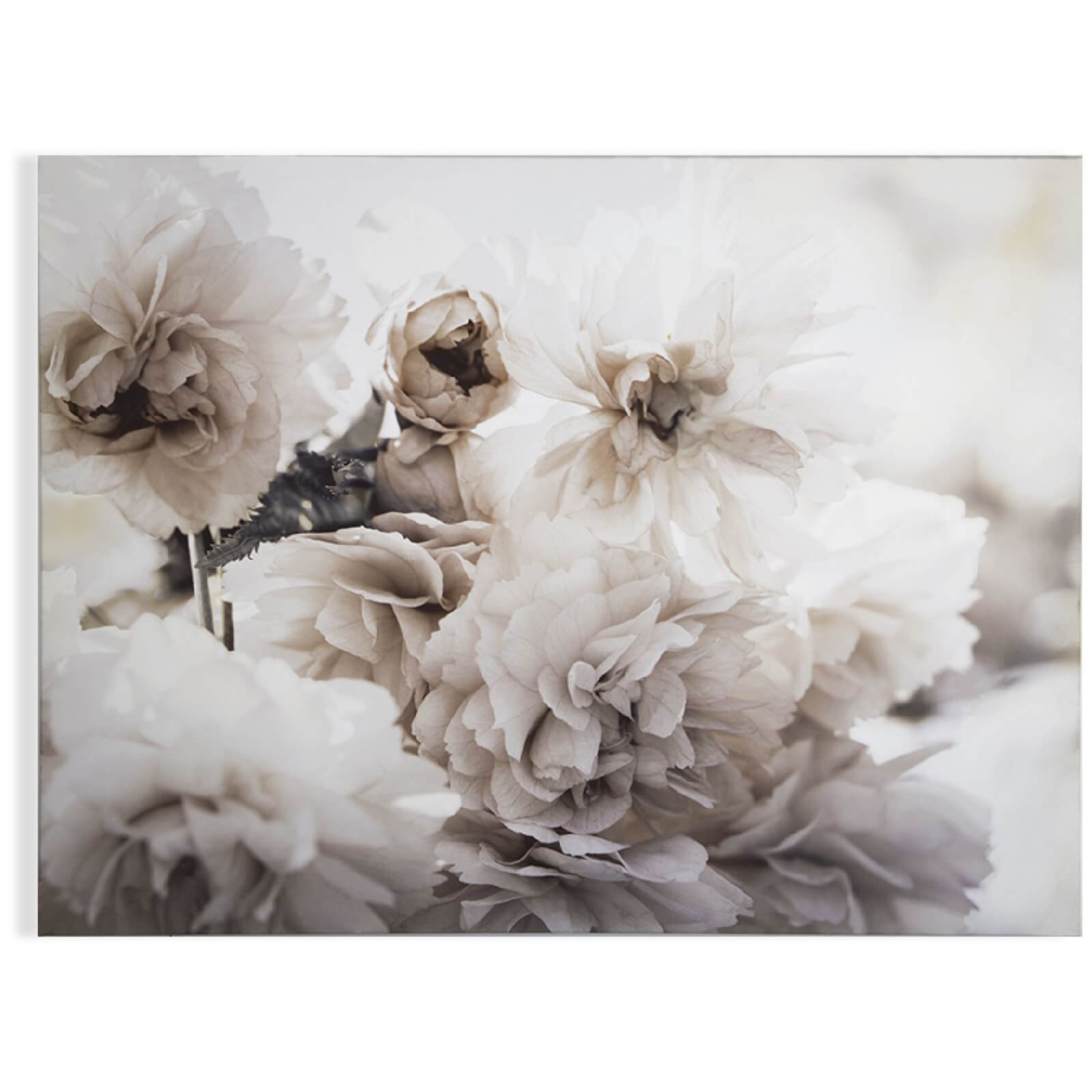 Art for the Home Tranquil Blossoms Printed Canvas