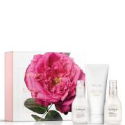Jurlique Rose Moisture Plus Essentials (Worth $104.00)