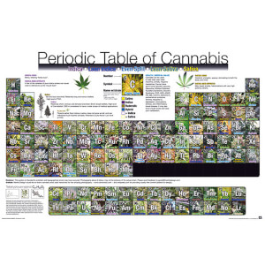Periodic Table of Cannabis - 61 x 91.5cm Maxi Poster