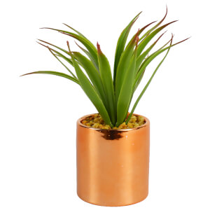Aloe Vera Plant in Ceramic Pot - Copper