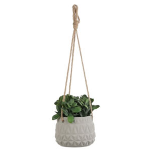 Hanging Plants - Green