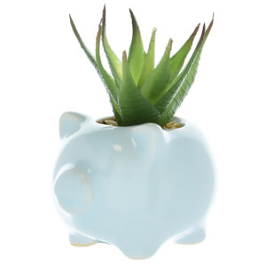 Candlelight Succulent in Pig Pot - Blue