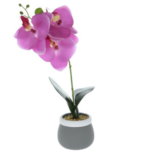 Candlelight Orchid in Cement Grey Pot - Pink