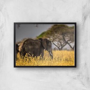 Elephant Giclee Art Print