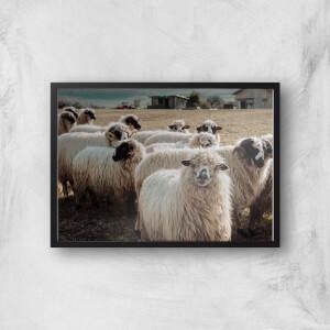 A Flock Of Sheep Giclee Art Print