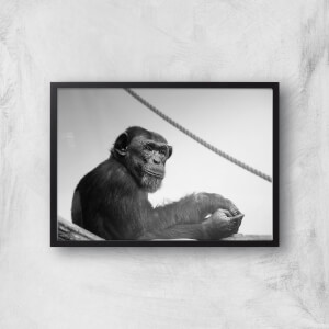 Chimpanzee Lost In Thought Giclee Art Print