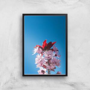 Blue Cherry Blossoms Giclee Art Print