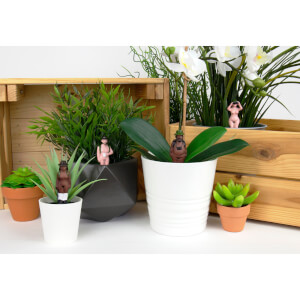Naked Ramblers - Mini Plant Pot Planters