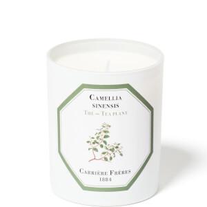 Carrière Frères Scented Candle Tea Plant - Camellia Sinensis - 185 g