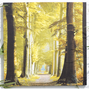 Woodland Path Outdoor Canvas 79x79cm