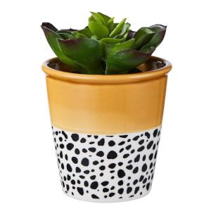Small Plant in Dalmatian & Ochre Pot