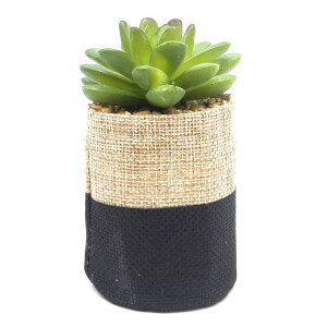 Small Plant in Two Tone Sack - Black & Natural