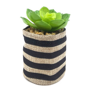 Small Plant in Striped Sack - Black & Natural
