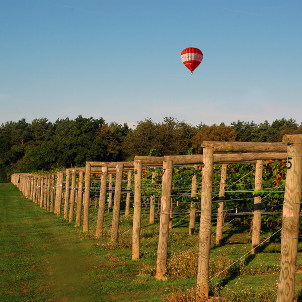 English Vineyard Tour, Wine Tasting and Lunch for Two