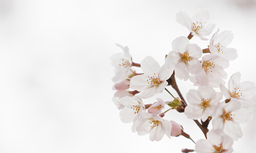 How to Help Hay Fever