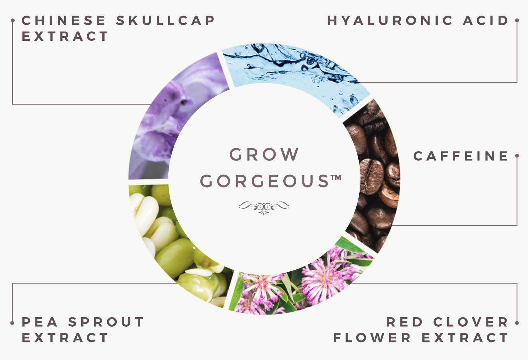 THE SCIENCE BEHIND THE SERUMS | OUR CORE INGREDIENTS