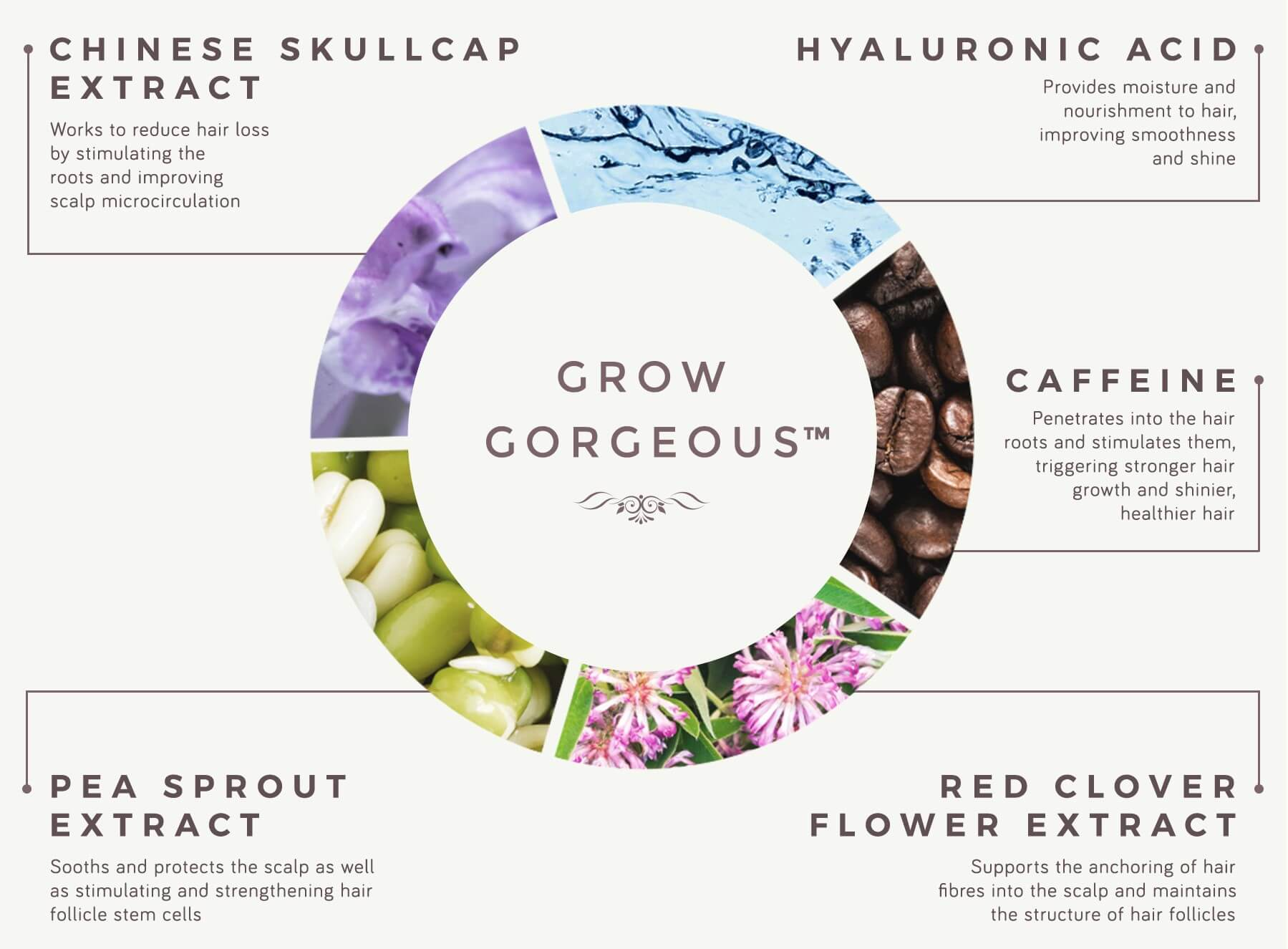 THE SCIENCE BEHIND THE SERUMS   OUR CORE INGREDIENTS