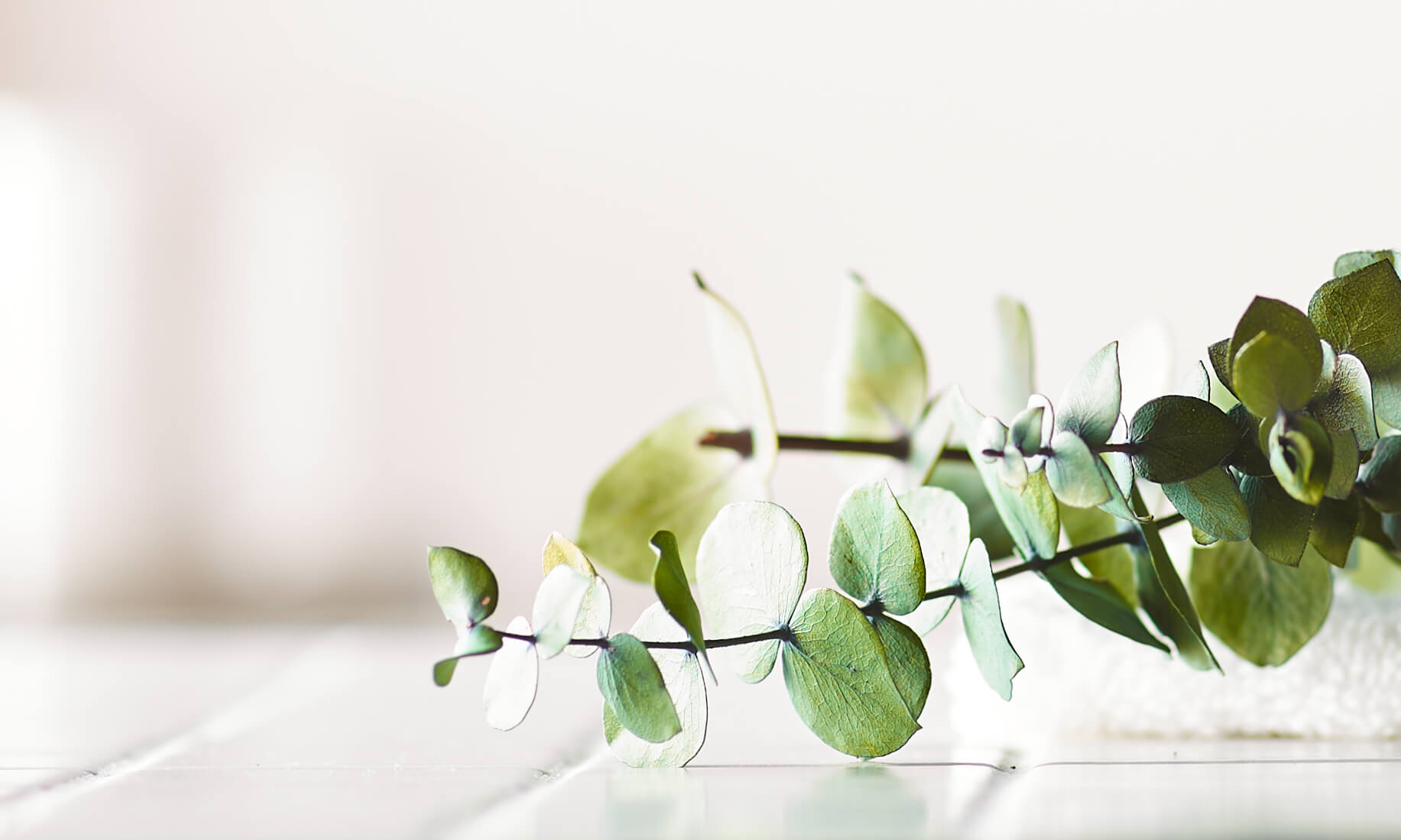 Eucalyptus Oil Uses & Benefits