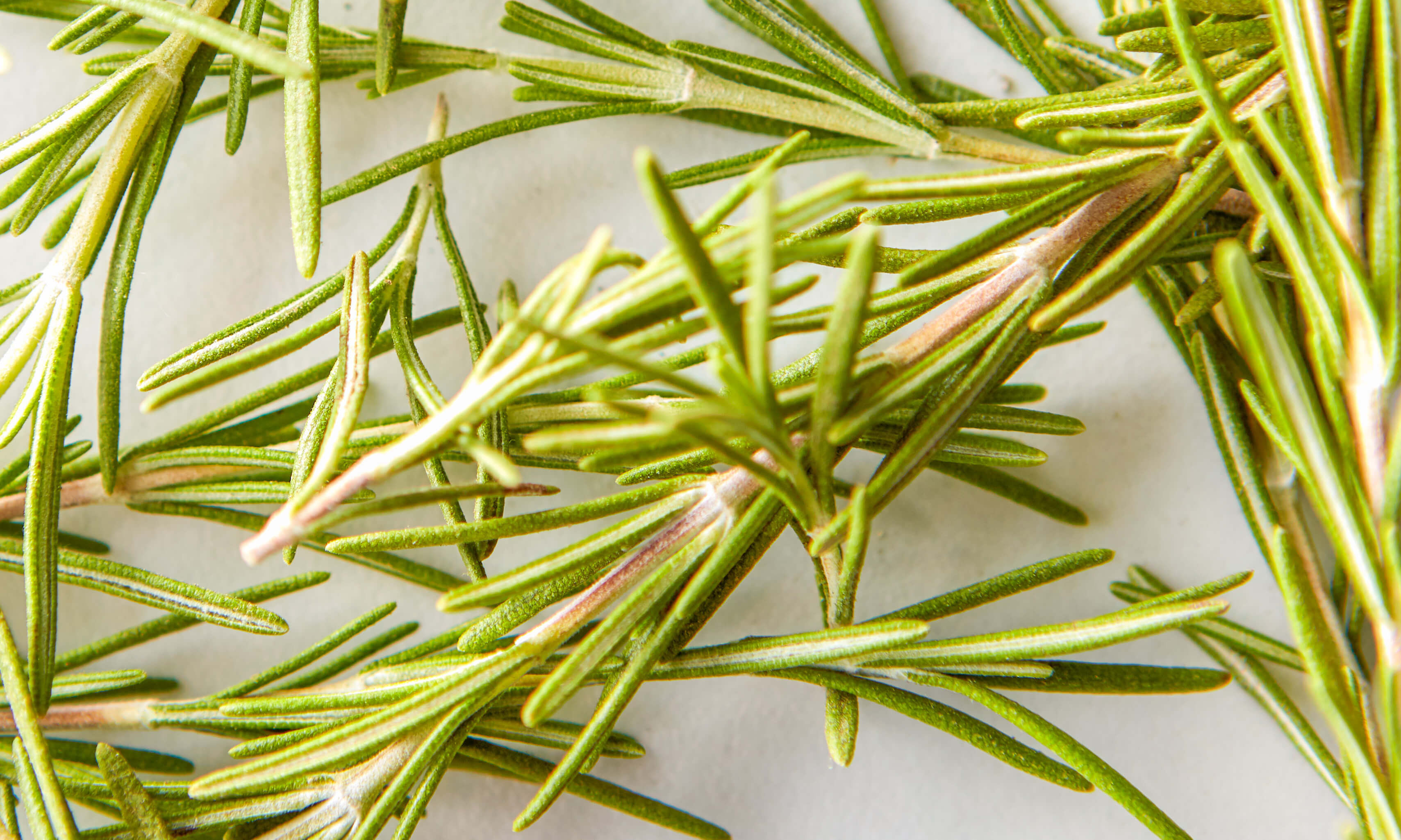 Rosemary Oil Uses & Benefits