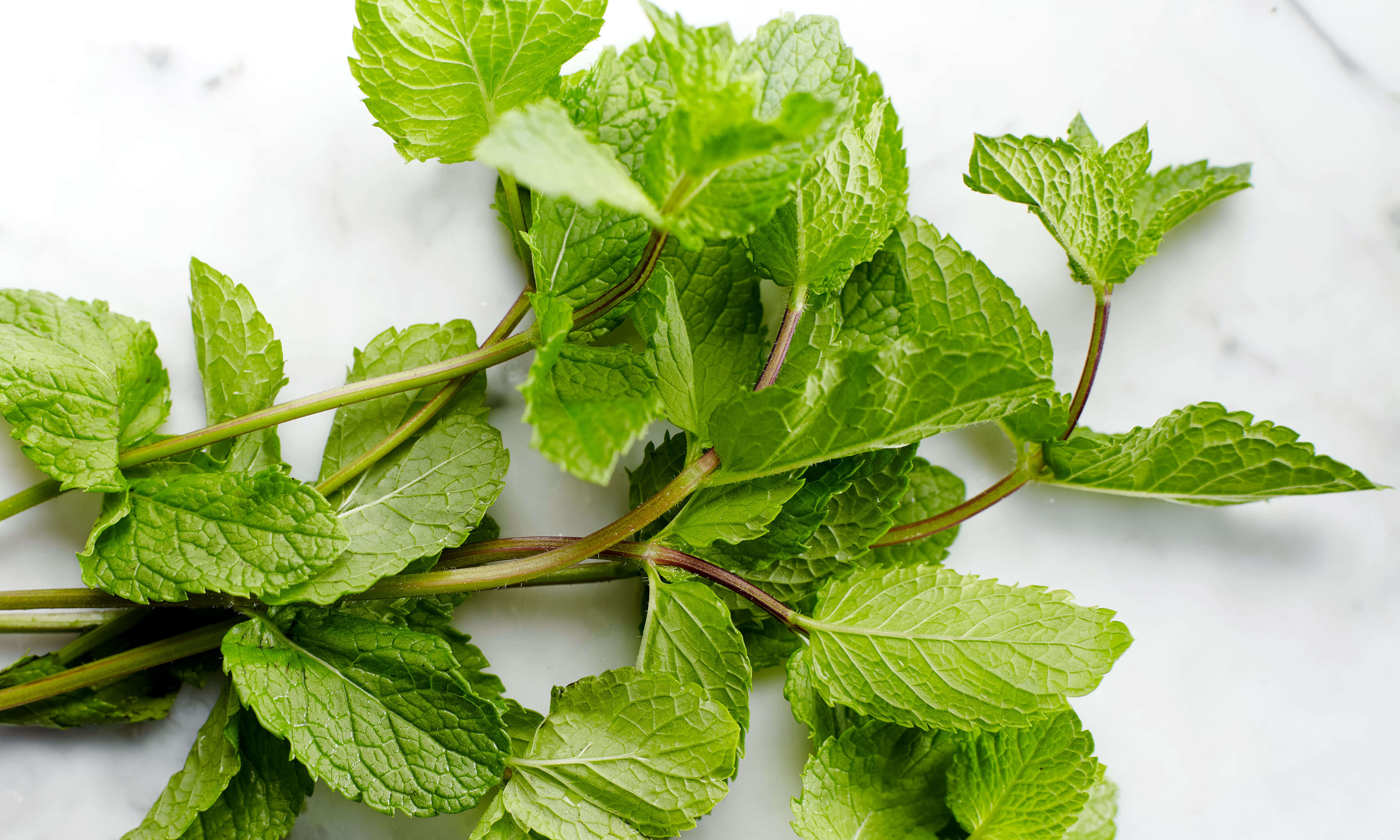 Peppermint Oil Uses & Benefits