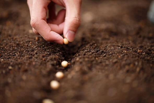 semilla en tierra