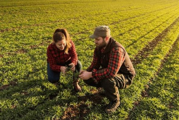 eux agriculteurs assis dans un champ