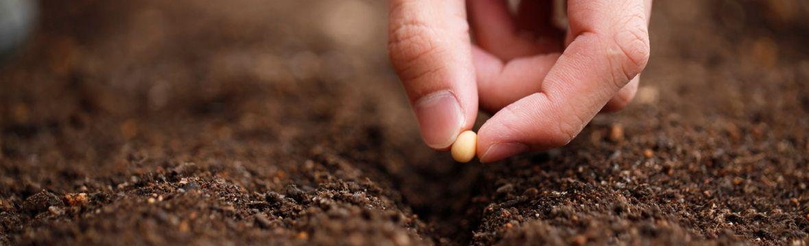 Main qui tiens une graine