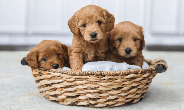 It's important to create fun, safe environment for weaning puppies