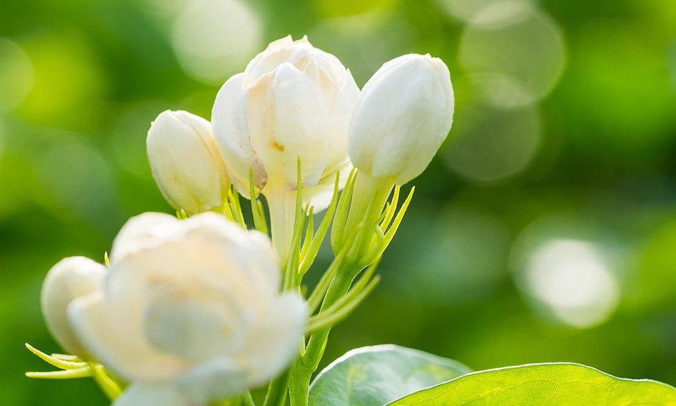 flower waxes