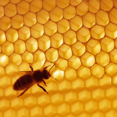 sobre  cera de abeja