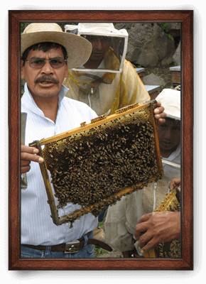 Honey ORIGIN: MEXICO