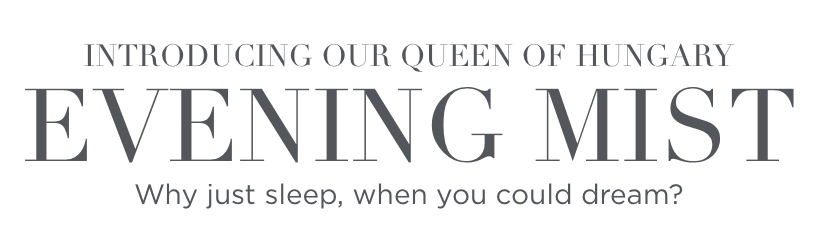 Introducing our Queen of Hungary Evening Mist. Why just sleep, when you could dream?