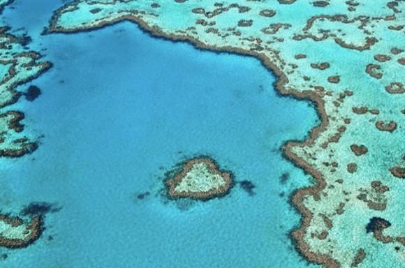 Grey water sage reef background image.