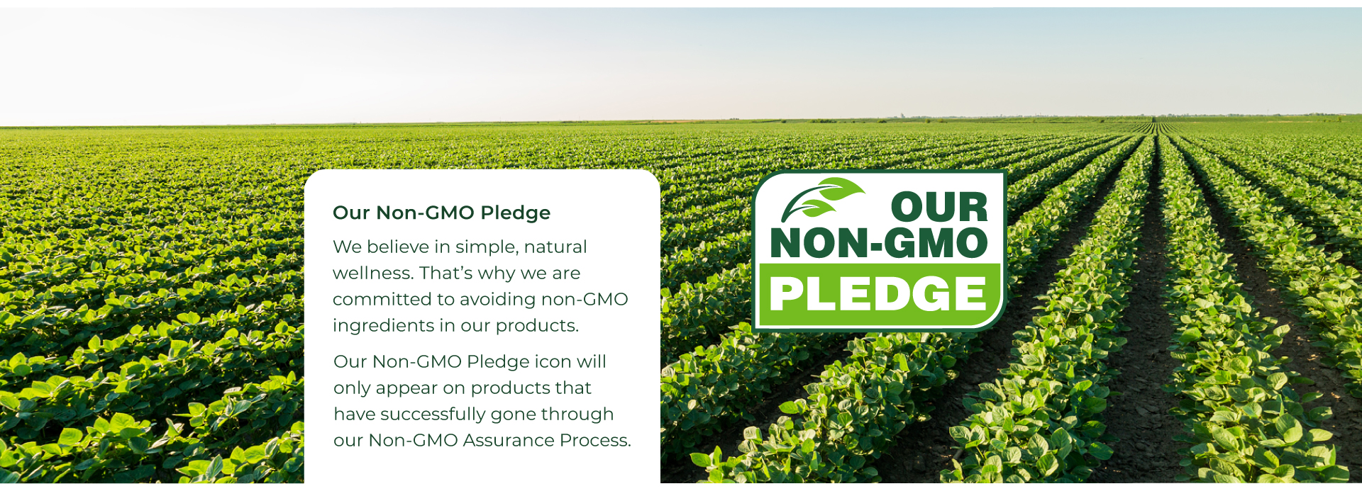 Our Non-GMO Pledge. We believe in simple, natural wellness.That's why we are committed to avoiding non-GMO ingredients in our products. Our Non-GMO pledge icon will only appear on products that have successfully gone through our Non-GMO assurance process.