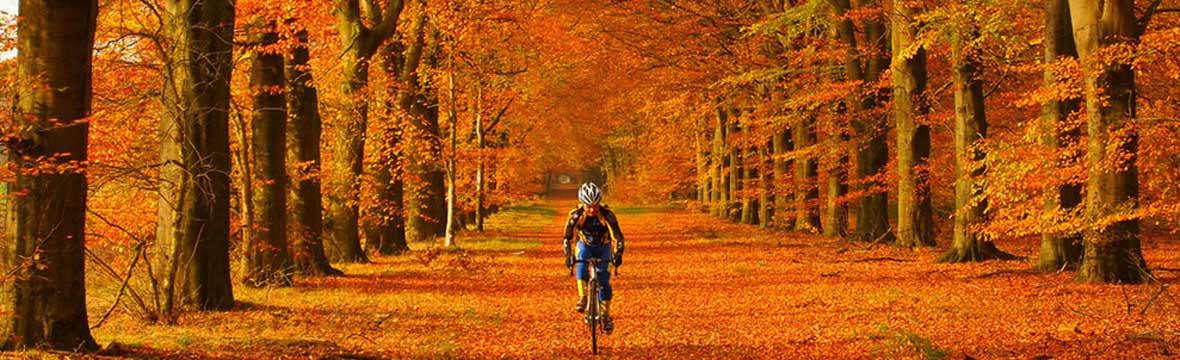 <b>サイクリングの秋<b>