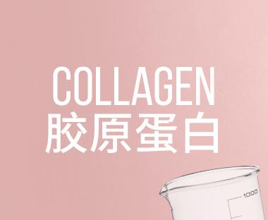 Collagen 胶原蛋白