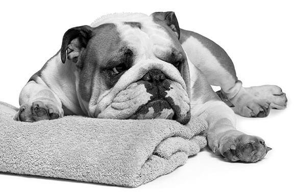 <font size=5><b>불독 스킨케어 포 맨 <br>(Bulldog Skincare for Men)</b></font>